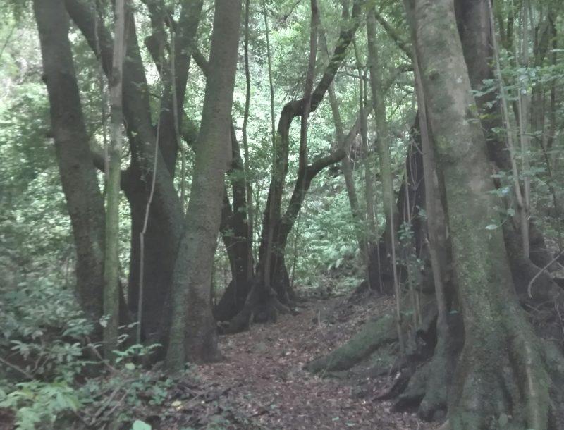 Yoga & Strömen: Dein Wald im Wohnzimmer