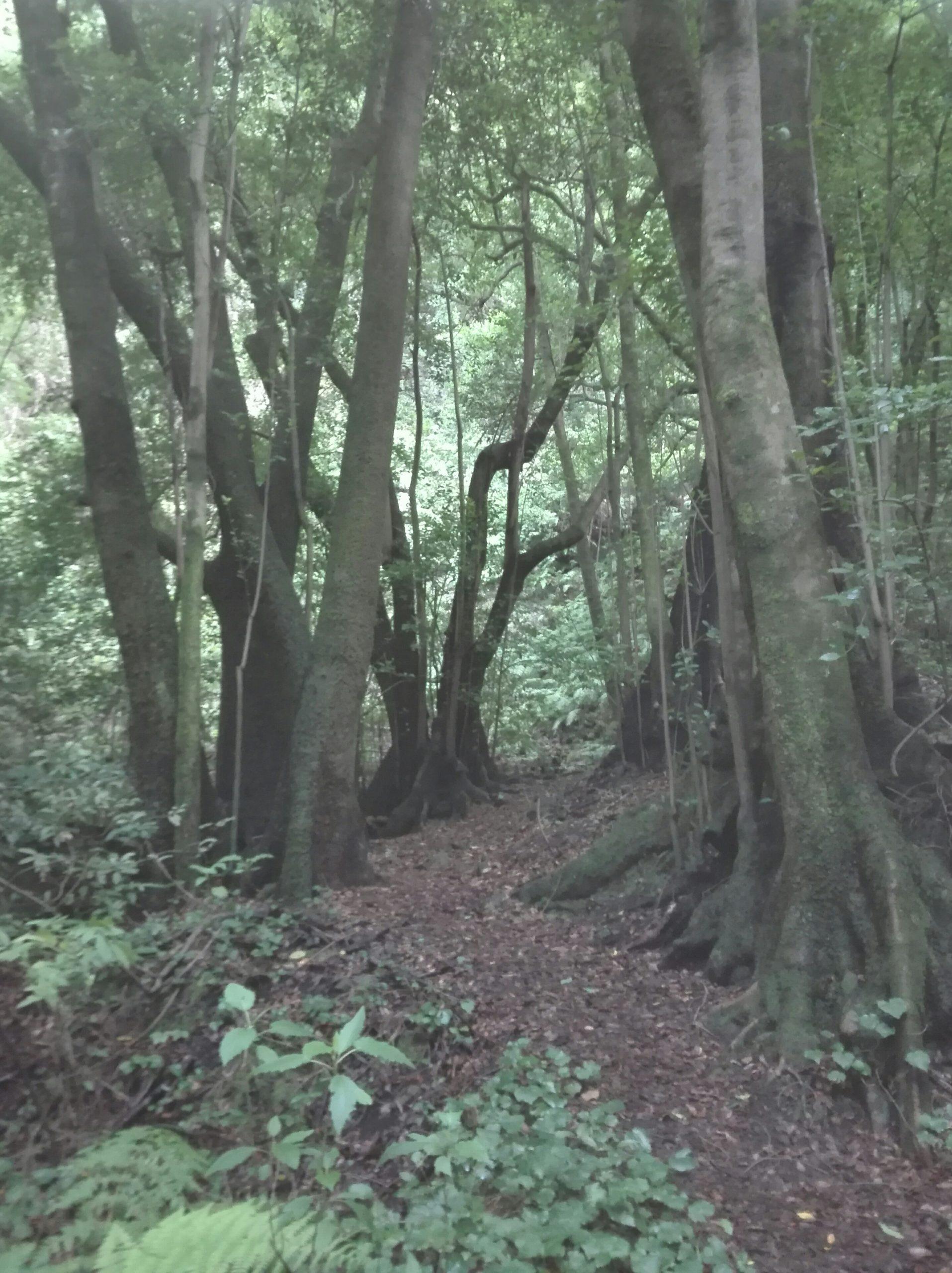 Dein Wald im Wohnzimmer